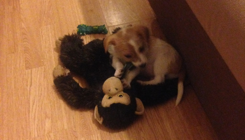 Buddy with his teddy