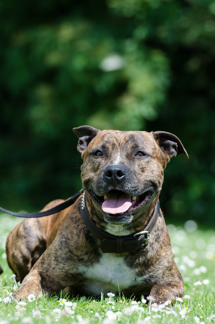 Best Dog Food For Staffordshire Bull Terrier